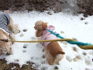 雪よ.jpg